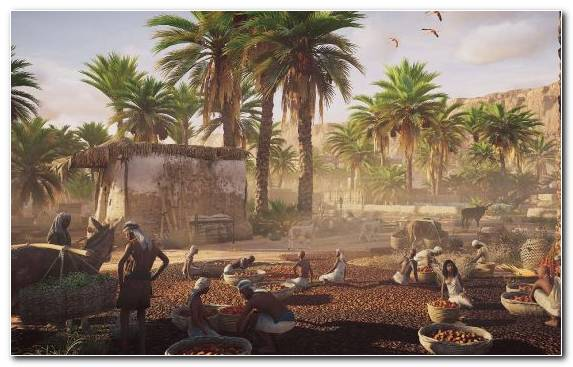 Image Assassins Creed Odyssey Archaeological Site Ruins Plant Palm Tree