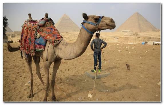 Image Cairo Camel Sand Egypt Landscape