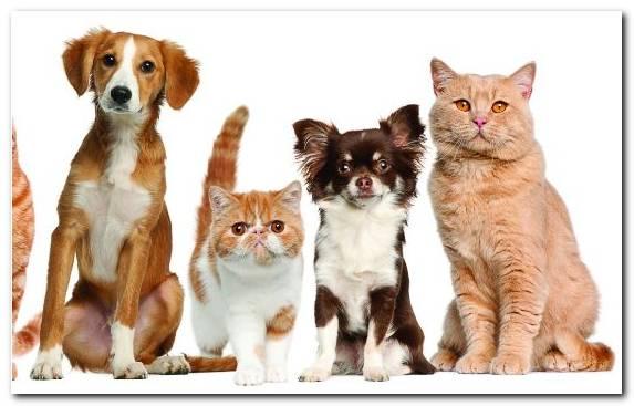 Image Dogcat Relationship Whiskers Cat Cat Food Companion Dog