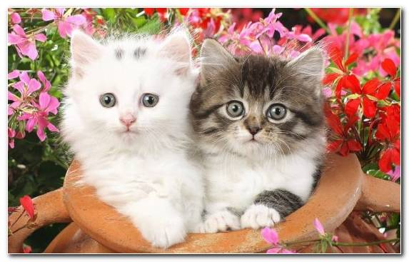 Image Dogcat Relationship Whiskers Cat Kitten Flower