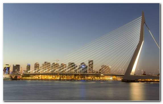 Image Erasmusbrug Cable Stayed Bridge Horizon Metropolis Cityscape