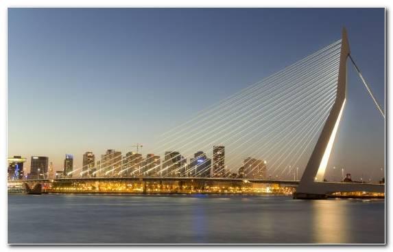 Image Erasmusbrug Cable Stayed Bridge Horizon Metropolis Cityscape