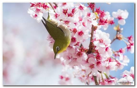 Image Factory Flower Twig Petal Spring