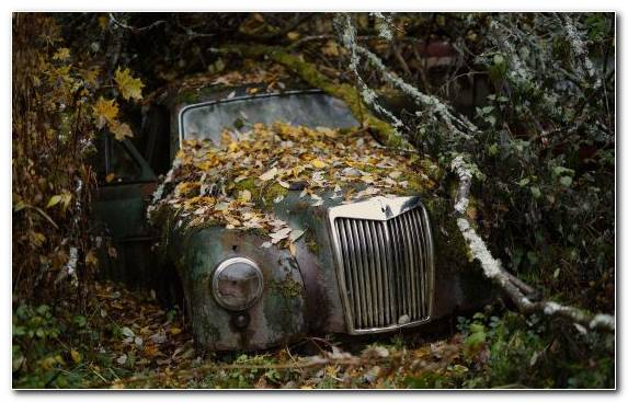 Image Factory Grasses Forest Scrap Car