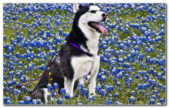 Image Factory Meadow Flowering Plant Breed Dog Breed