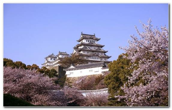 Image Factory Spring Japanese Castle Cherry Blossom Sky