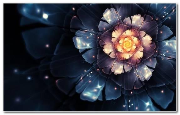 Image Factory Spring Flower Petal Fractal
