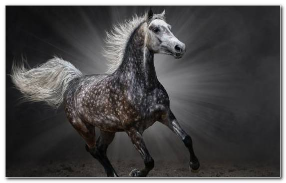Image Gray Snout Mare Horses Stallion