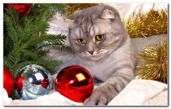 Image Santa Claus Christmas Moustache Ded Moroz Cat