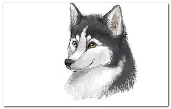 Image Siberian Husky the siberian husky head chapter alaskan klee kai