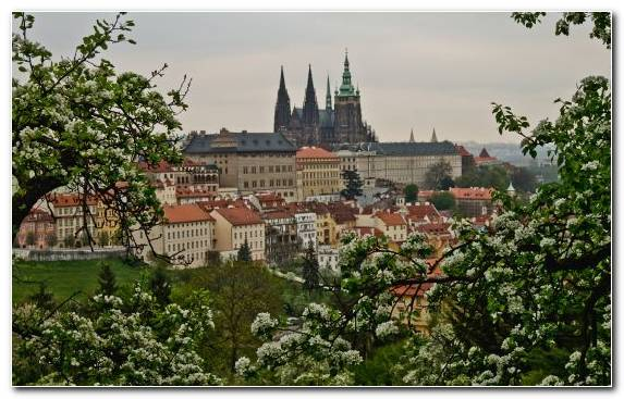 Image St Vitus Cathedral Hotel Plant Tourist Attraction City