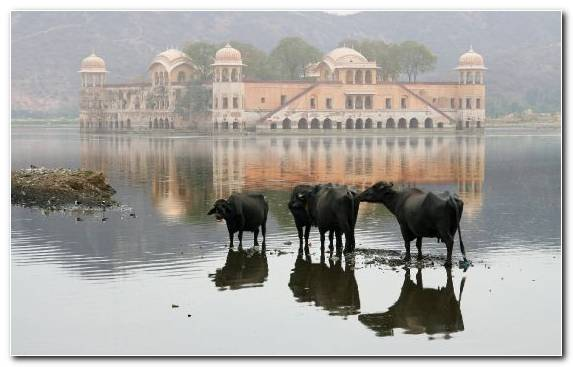 Image Taj Mahal water cattle sky reflection