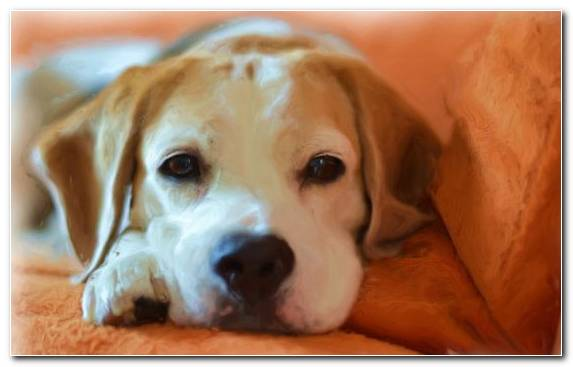 Image akita dachshund pet dog snout