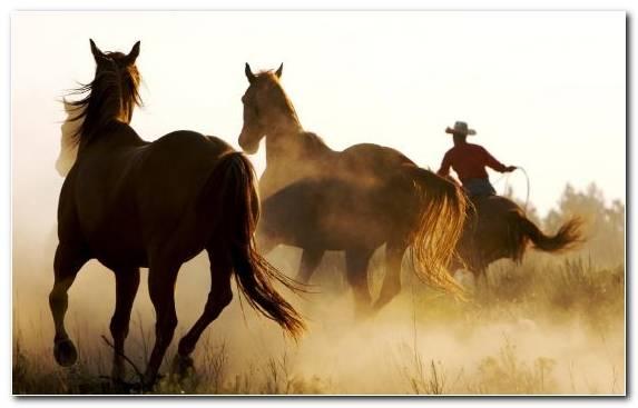 Image american frontier cowboy lasso wild horse mane Copy
