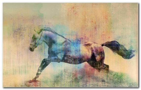 Image American Miniature Horse Watercolor Paint Mustang Horse Horses Horse