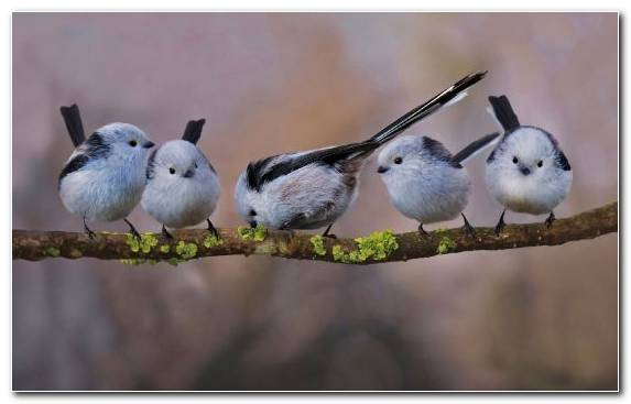 Image Android Feather Pierrot Wren Perching Bird