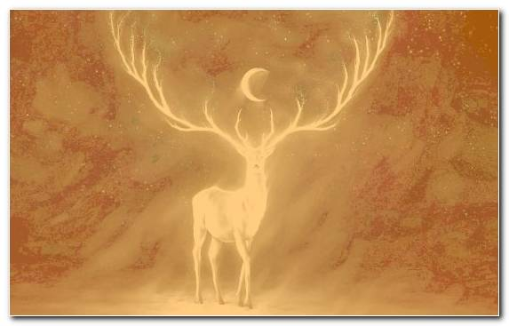 Image Android Illustration Creative Arts Antler Deer