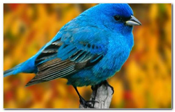 Image Angry Birds Perching Bird Bird Nest Bird Bluebird