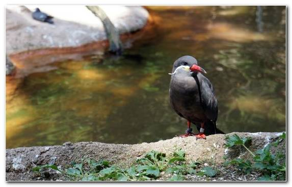 Image Animal Bald Eagle Water Bird Flamingo Water