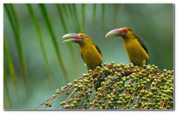 Image Animal Bird Cat Coraciiformes Old World Oriole