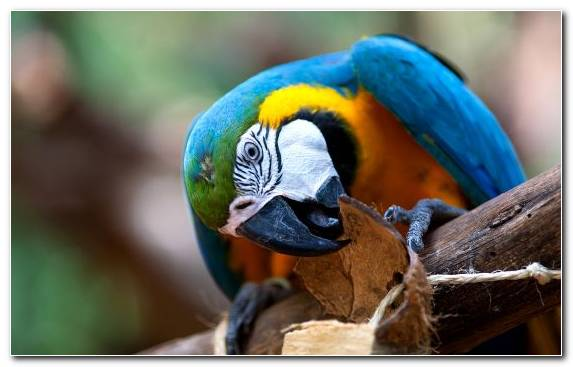 Image Animal Common Pet Parakeet Macaw Beak Hyacinth Macaw