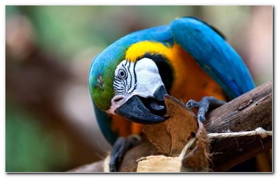 Image Animal Common Pet Parakeet Macaw Beak Hyacinth Macaw