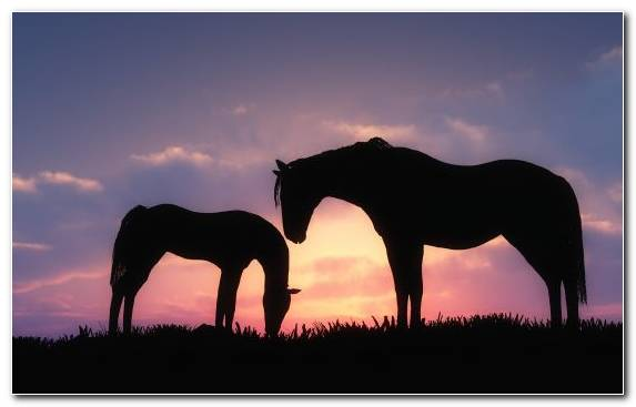 Image Animal Ecoregion Silhouette Pasture Horses