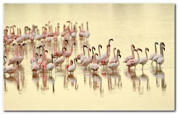 Image Animal Flamingo Water Hawk Water Bird