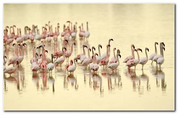 Image animal flamingo water hawk water bird