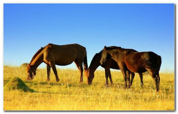 Image Animal Flora Grazing Ecosystem Mustang Horse