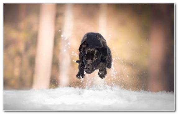 Image Animal Freezing Snow Dog Winter