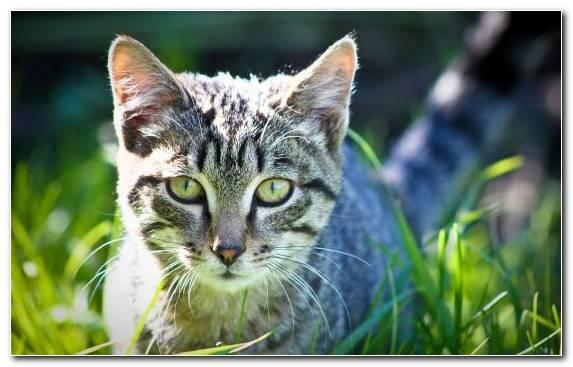 Image Animal Green Grasses Moustache Kitten