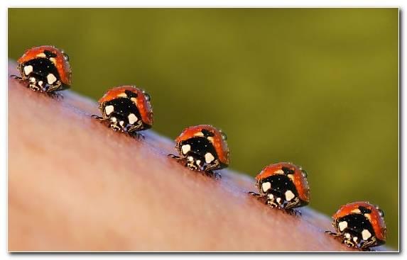Image Animal Insect Macro Photography Arthropod Invertebrates