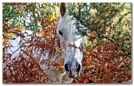 Image animal nature reserve autumn branch leaf