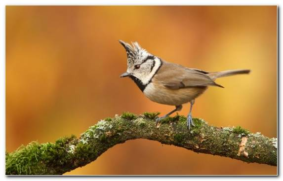 Image Animal Old World Flycatcher Bird Perching Bird Nightingale