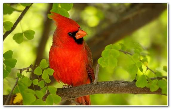 Image Animal Plumage Branch Bird Wildlife