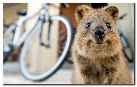 Image Animal Whiskers Human Wildlife Marsupial