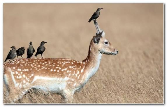 Image Antelope Ecology Impala Deer Symbiosis