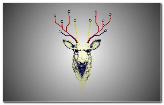 Image Antler Reindeer Graphic Design Deer Horn