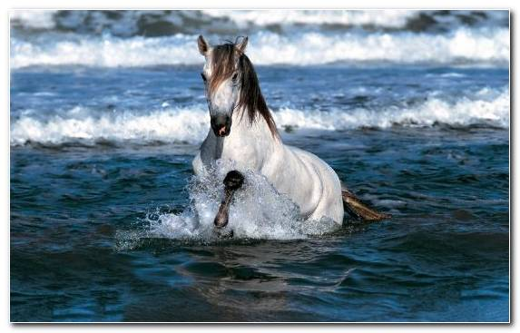 Image Appaloosa Wave Sea White Mustang   Copy