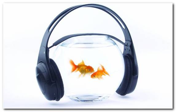 Image Aquarium Audio Equipment Goldfish Audio Technology   Copy