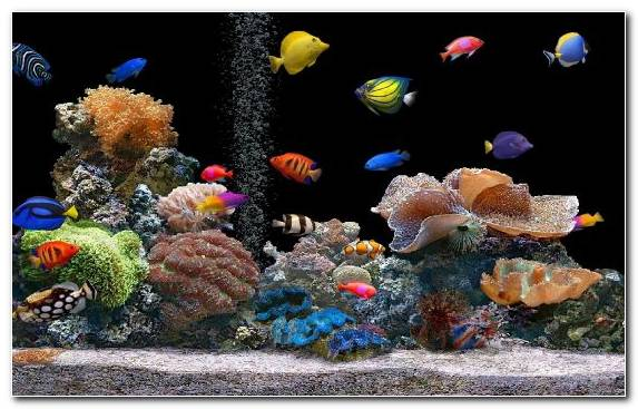 Image Aquarium Decor Coral Reef Fish Marine Biology Stony Coral Coral Reef