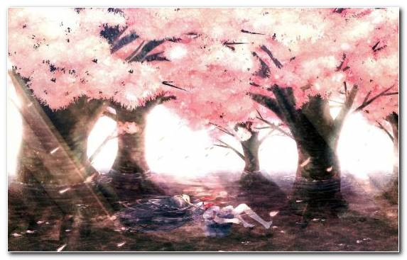 Image Art Spring Manga Watercolor Paint Blossom