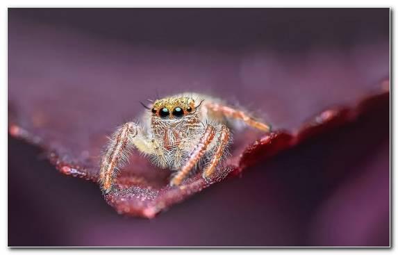 Image Arthropod Araneus Insect Spider European Garden Spider