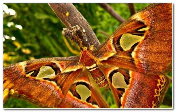 Image Arthropod Wing Butterfly Invertebrate Insect