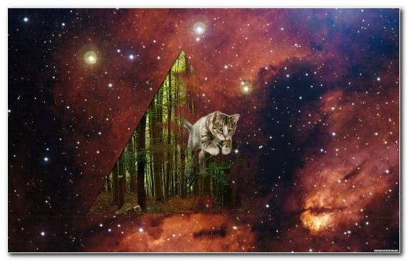 Image Astronomical Object Atmosphere Cosmos Cat Nature