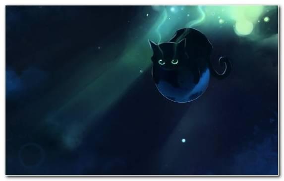 Image Atmosphere Kitten Sky Digital Art Drawing