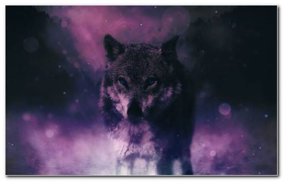 Image Atmosphere Wolf Black Panther Nature Sky