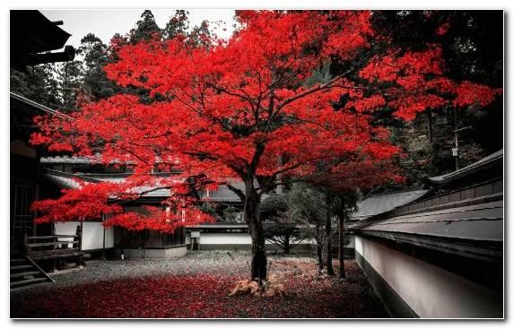 Image Autumn Nature Spring Woody Plant Maple Tree