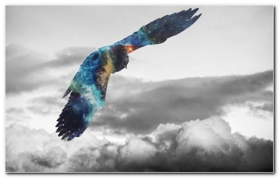 Image Bald Eagle Oryol Bird Of Prey Cloud Golden Eagle